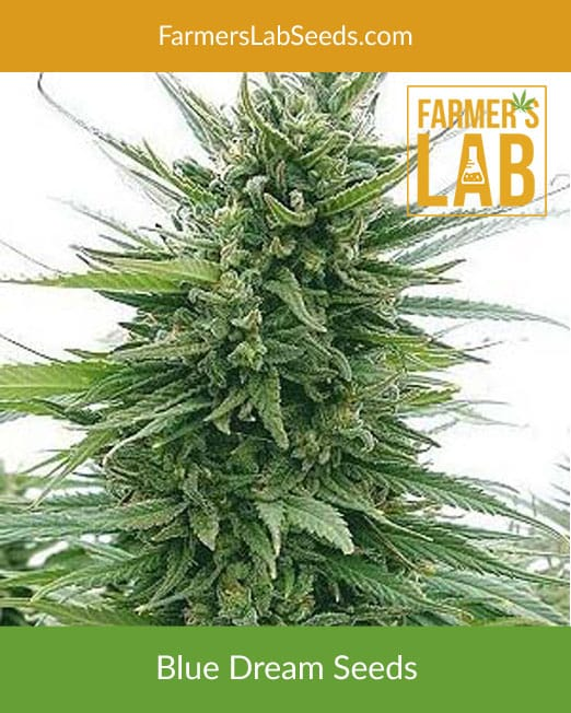 Cannabis Seed Bank USA